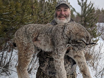 Canadian Lynx Hunts in BC